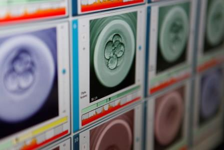 IDIBELL and Dexeus Mujer will study embryonic development through the genetic edition of human embryos