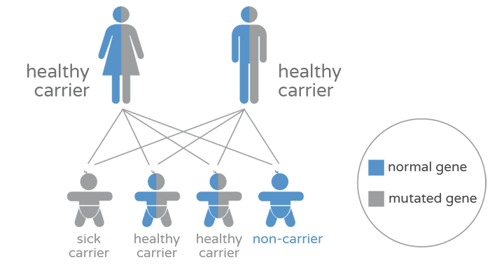 Genetic carrier screening (qCarrier) - Carriers